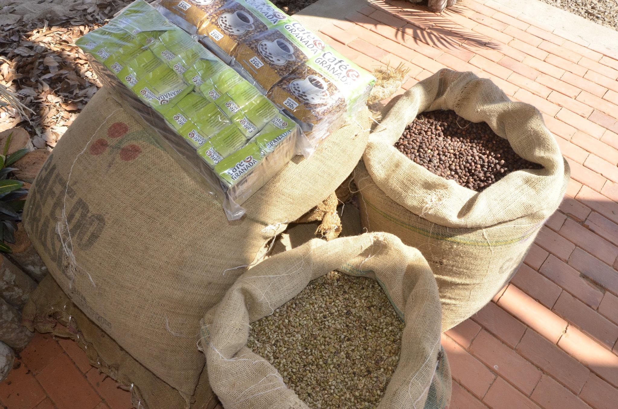 Governo e Embrapa discutem a importância da cadeia do café na Amazônia em live nesta sexta-feira