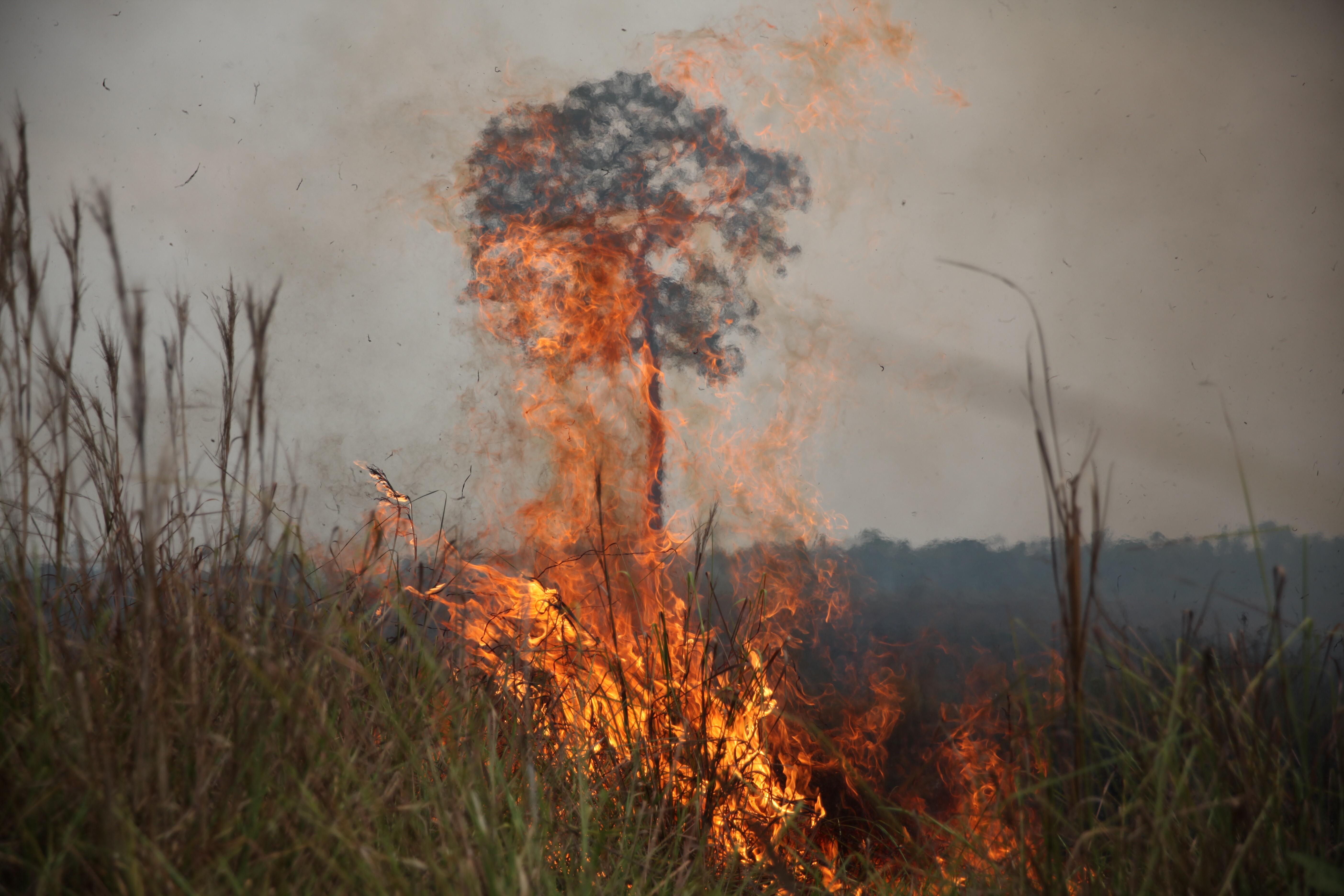 População pode ajudar no combate às queimadas