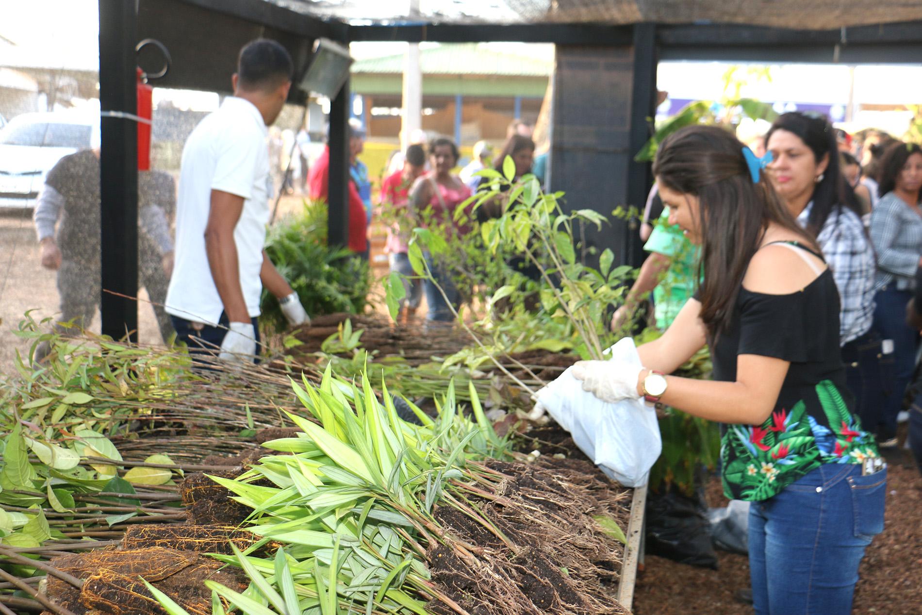 Viveiro da Floresta distribui mais de 5 mil mudas de plantas na Expoacre