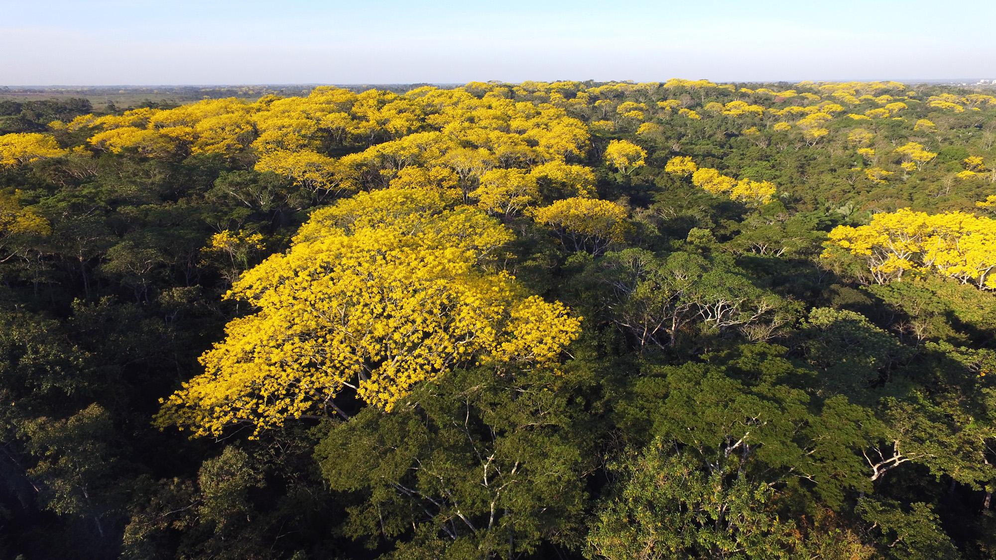 Sema lança consulta pública para concessão florestal em Tarauacá