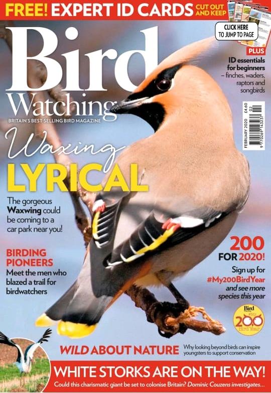 Observação de aves no Acre é destaque em revista inglesa