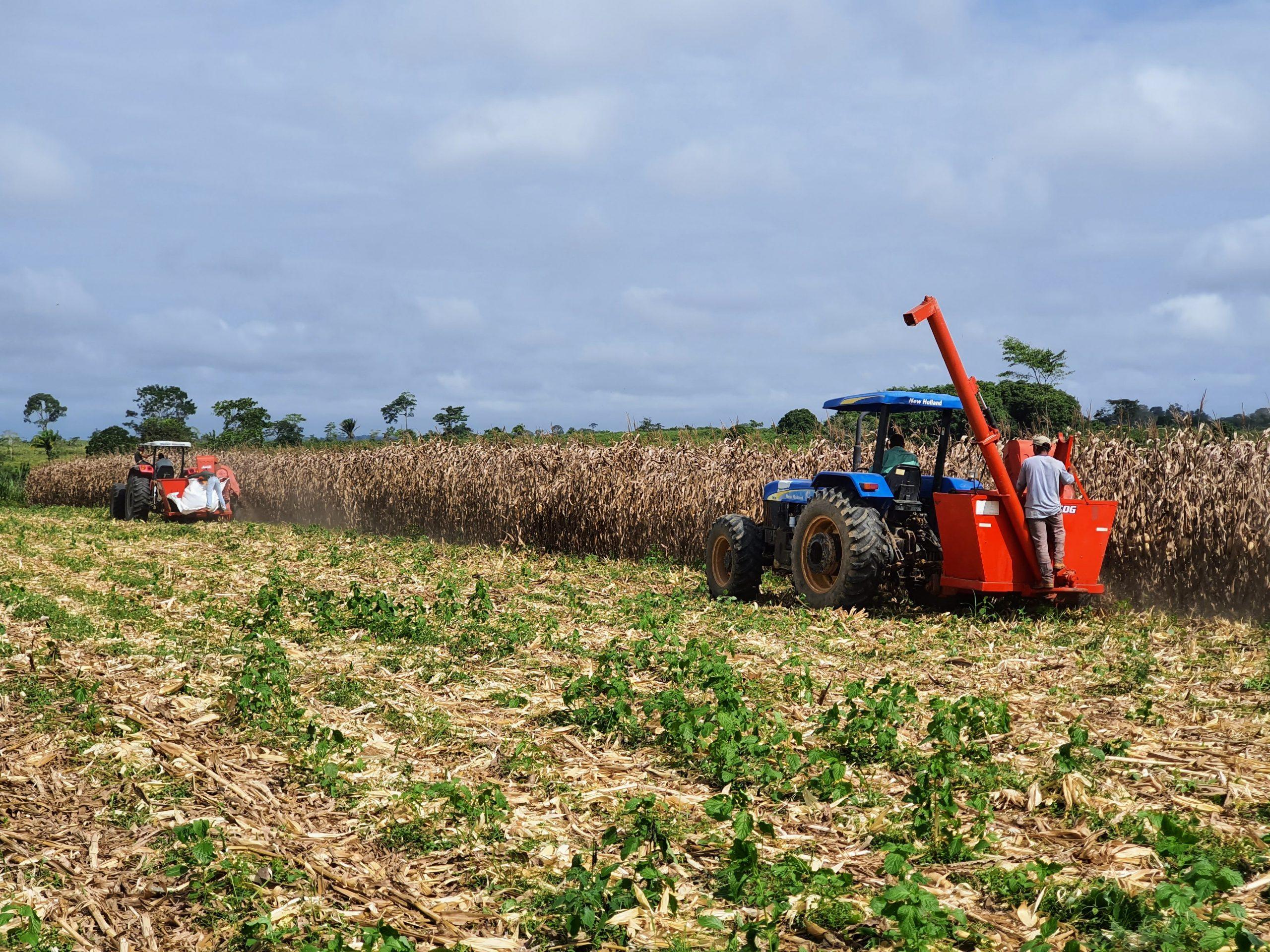 Com apoio do governo, produtor aposta no milho e inspira agricultores da região