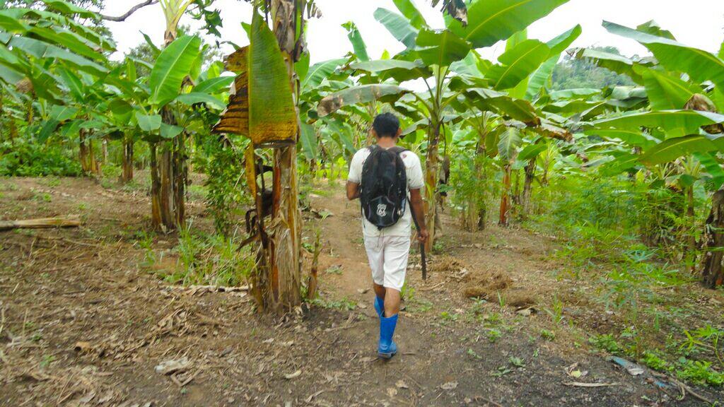 Governo avança com programas de fruticultura para gerar emprego e renda em terras indígenas