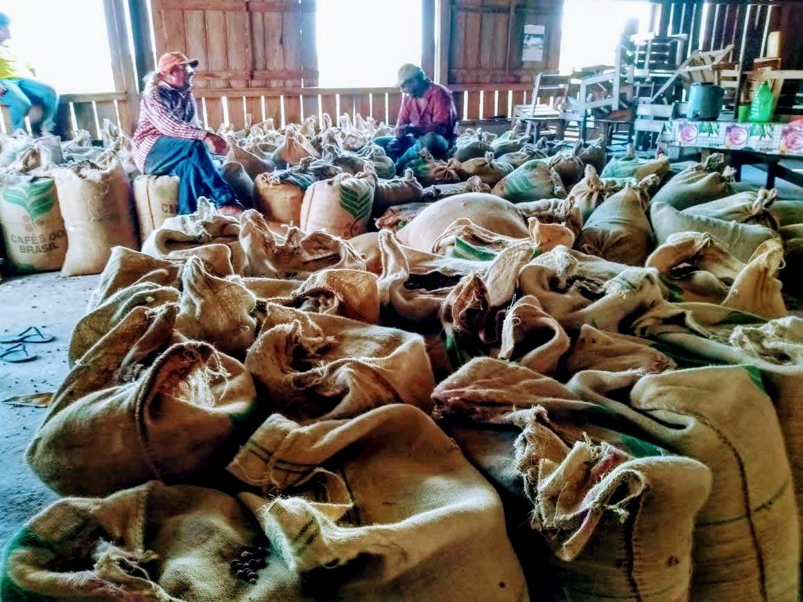 Produtores do Assentamento Tocantins apostam na cafeicultura e pretendem disparar na colheita
