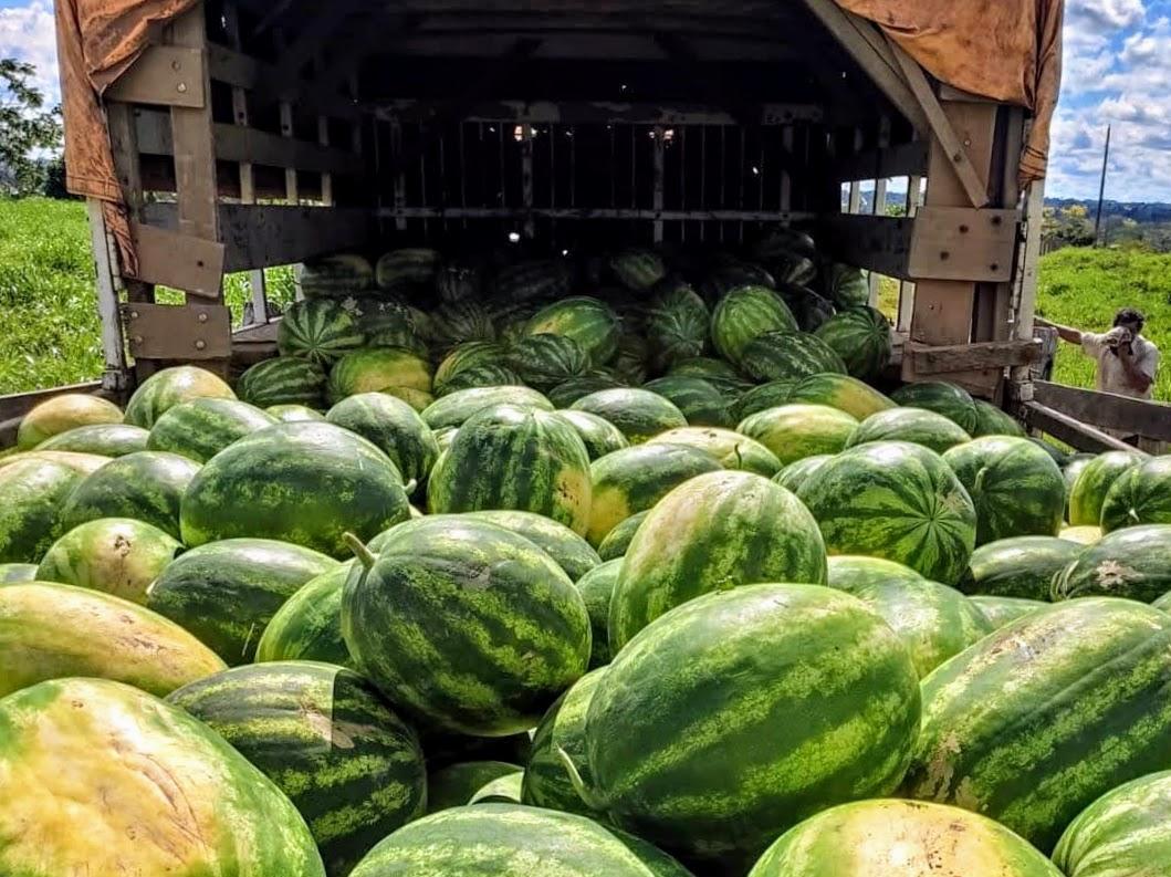Empreendedor aposta na agricultura e quer ampliar resultados com apoio do governo