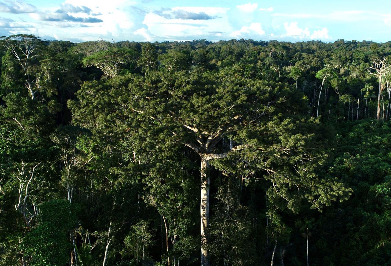 Estado lança consulta pública para a versão preliminar do Plano Anual de Outorga Florestal 2021
