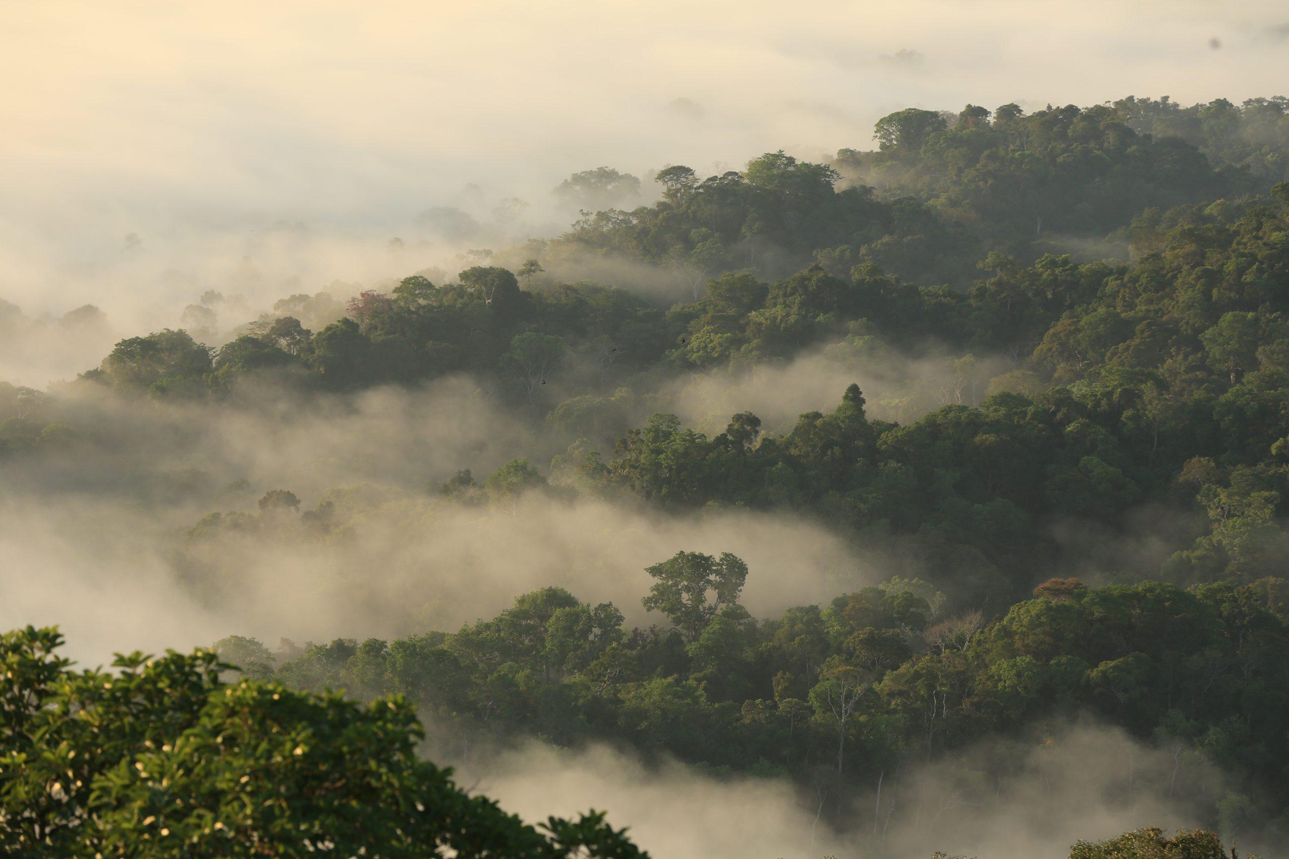 Equipe do governo vai a Brasília articular parcerias para implementar concessão florestal no Acre