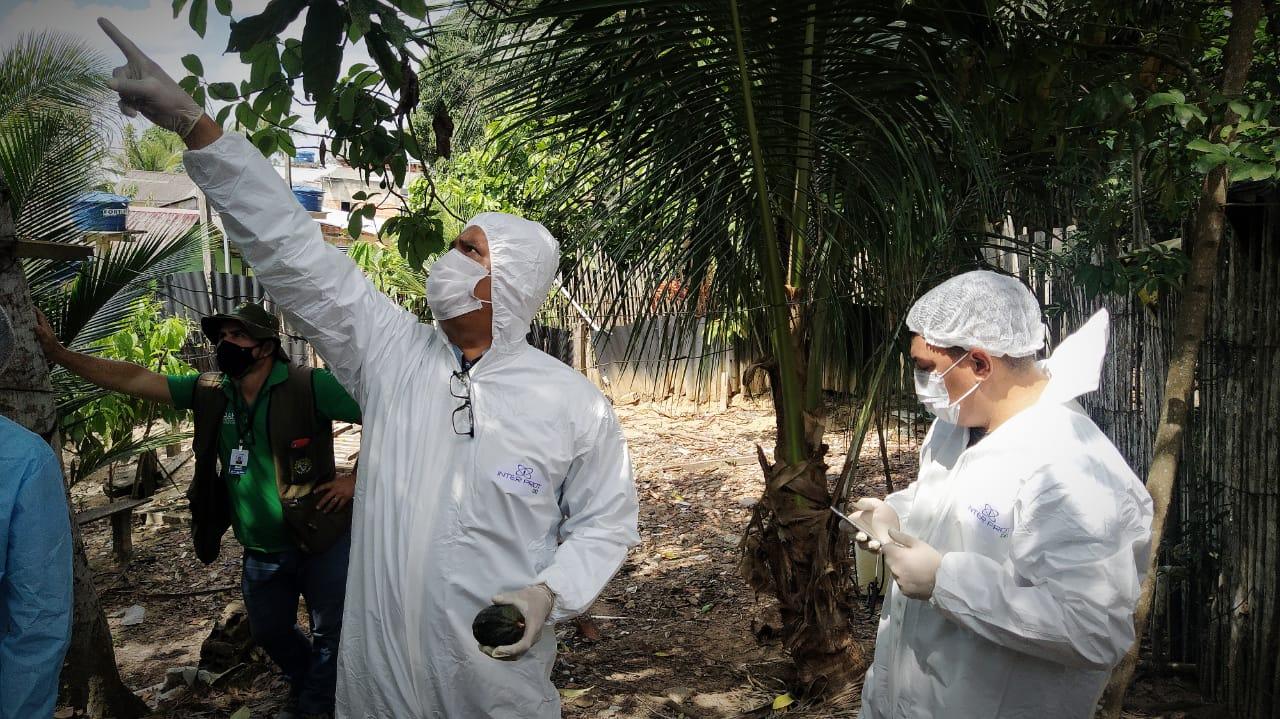 Em Cruzeiro do Sul, governo e Ministério da Agricultura registram casos de monilíase e monitoram plantios com suspeitas da doença